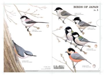実物大クリアファイル 日本の野鳥1